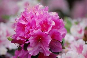 Plante si flori pentru gradina